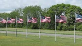 póly : several American flags blowing in a strong wind