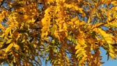 осень : colorful leaves blowing in a gentle breeze against a blue sky