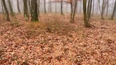 romantismo : Autumn landscape in a foggy forest