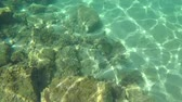 spain : Underwater life with a school of fish in Spanish coastal Stock Footage