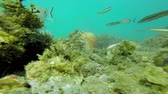 Underwater wildlife with many fishes in a Spanish coastal