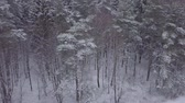 холодный : Aerial vertical footage of snowy forest in winter.