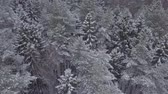Aerial footage of snowy trees and spruces in forest.