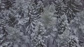 Drone flies above forest with snowy trees and spruces. It is snowing. Stock mozgókép