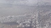 belarus : Aerial footage of snowy forest in the north of the planet.
