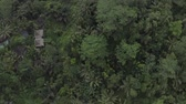 balinese : Aerial view of tropical rainforest jungles with palm trees, near Ubud, Bali, Indonesia.