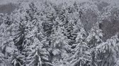 zúzmara : Aerial footage of winter forest. Drone flies over snowy tops of fir-trees, pines, spruces. Winter mood. Nature of Lapland. Russia. Stock mozgókép