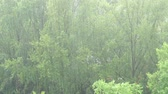 강수량 : Summer heavy rain in city. Top view on green trees and pouring rain. 4K video 무비클립