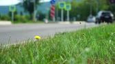 sugárút : Car, bus rides on road. Blurred background. Close up shot, focused on grass in foreground. Summer day, car traffic in provincial town. Handheld shoot near roadside