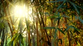 taze : Sun shining through bamboo leafev in bamboo grove