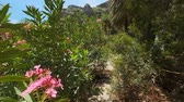 green canyon : Walking in the palm forest. Crete island, Greece Stock Footage