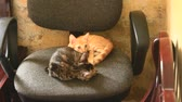 bigodes : Two cats on a chair