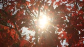 weather : The sun through the leaves