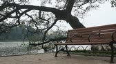 salgueiro : in the park bench and tree Lake