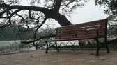 salgueiro : At the park, bench and tree