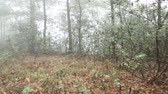 irreal : Murky forest, foggy Stock Footage