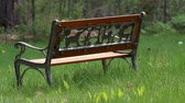 oak : A childrens park bench with Dandelion in the Spring season. Stock Footage
