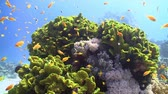 wild : Colorful Fish on Vibrant Coral Reef, static scene, Red sea