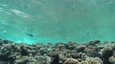 mergulhador : Waves of Sea Over the Coral Reef, view from underwater Stock Footage