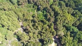Aerial View of the Mountain Forest with Road, Sintra Portugal Vídeos