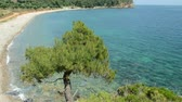 quiet : A pine tree growing on a cliff top overlooking a quiet bay in Greece