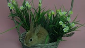 coelho : Cute rabbit sitting in a basket Vídeos