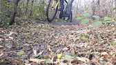 corner : Cyclist In Autumn. Fall Forest.autumn