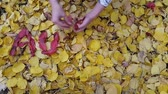 seasonal : word autumn from red leaves by the hands of a girl Stock Footage