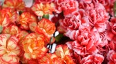 goździk : close-up, view from above, Flower bouquet , rotation, the floral composition consists of Bright yellow, orange and pink turkish Carnation. Wideo