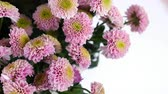 goździk : close-up, Flowers, bouquet, rotation on white background, floral composition consists of pink Santini