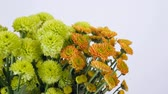 pack : close-up, Flowers, bouquet, rotation on white background, floral composition consists of green and orange Santini Stock Footage