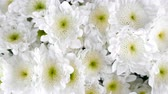 pack : close-up, view from above, Flowers, bouquet, rotation, floral composition consists of white Chrysanthemum Chamomile.