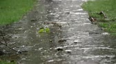 brushwood : close-up, rain dripping onto the path. summer rain, a thunderstorm, a heavy downpour at the recreation center, in a pine forest, park. water flows down in large drops Stock Footage
