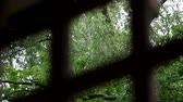 brushwood : close-up, view from a wooden pergola. summer rain, a thunderstorm, a heavy downpour at the recreation center, in a pine forest, park. water flows down in large drops