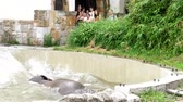 pachyderm : an elephant is bathing in a special pool at the zoo Stock Footage