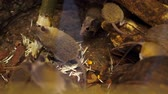 rat : Wild forest, small mice, rodents, gnaw a branch, a tree on nature. close-up Stock Footage