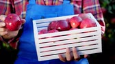 engradado : male hands holding a wooden box with freshly harvested ripe organic apples in sunshine light, on farm in orchard, on a sunny autumn day . Agriculture and gardening concept. Healthy nutrition.