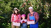 bahçıvan : picking apples on farm, in garden. on hot, sunny autumn day. portrait of family of farmers, holding in their hands wooden boxes with red ripe organic apples, smiling,