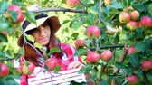 engradado : close-up, portrait of woman farmer or agronomist wearing a hat, picking apples on farm in orchard, on sunny autumn day. holding a wooden box with red apples, smiling. Agriculture and gardening concept. Healthy nutrition.