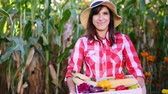 coletar : smiling female farmer in plaid shirt, gloves and hat holds a box with different fresh vegetables, harvest. background of cornfield, on a farm, vegetable garden, sunny summer day.