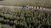 carregador : apple orchard, harvest of apples, tractor carries large wooden boxes full of green apples, top view, aero video