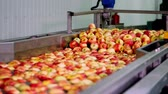 качество : fresh picked apple harvest. The process of washing apples in a fruit production plant, Special bath, packing tub at fruit warehouse. Sorting apples at the factory. food industry