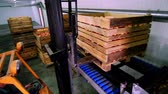 ripened : forklift truck load a large wooden box, full of fresh picked apples on special equipment for washing apples, in a fruit production plant, Sorting apples at the factory. food industry