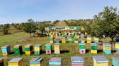 méhkas : Bees in the apiary. in the meadow a lot of bee houses, hives are. honey production on farm. The bees swarm alongside hives . natural honey production, organic products. Stock mozgókép
