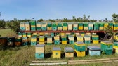 лаванда : Bees in the apiary. in the meadow a lot of bee houses, hives are. honey production on farm. The bees swarm alongside hives . natural honey production, organic products. Стоковые видеозаписи