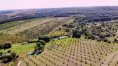 orzech : farm, fields of walnut plantations. rows of healthy walnut trees in a rural plantation with ripening walnuts on trees on a sunny day.aero video, drone