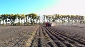 клубень : aero video. Farm machinery Harvesting fresh organic potatoes in an agricultural field. coupled with a tractor, Red colored potato harvester, digs up and gently places potatoes in special container. early autumn Стоковые видеозаписи