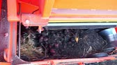 birleştirmek : close-up. Red colored potato harvester, digs up and places potatoes on conveyor belt to special container. Farm machinery Harvesting fresh organic potatoes in an agricultural field. early autumn