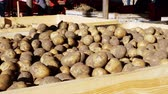 tubers : harvested potatoes standing in large wooden containers, boxes, filled to top. potatoes waiting to go to market for sale. annual potatoes harvesting period on farm. agricultural production sector.