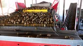 grande grupo de objetos : special mechanized process of Potato sorting at farm. potatoes are unloaded on conveyor belt, for sorting through, then put in wooden boxes for packaging. agricultural production sector.